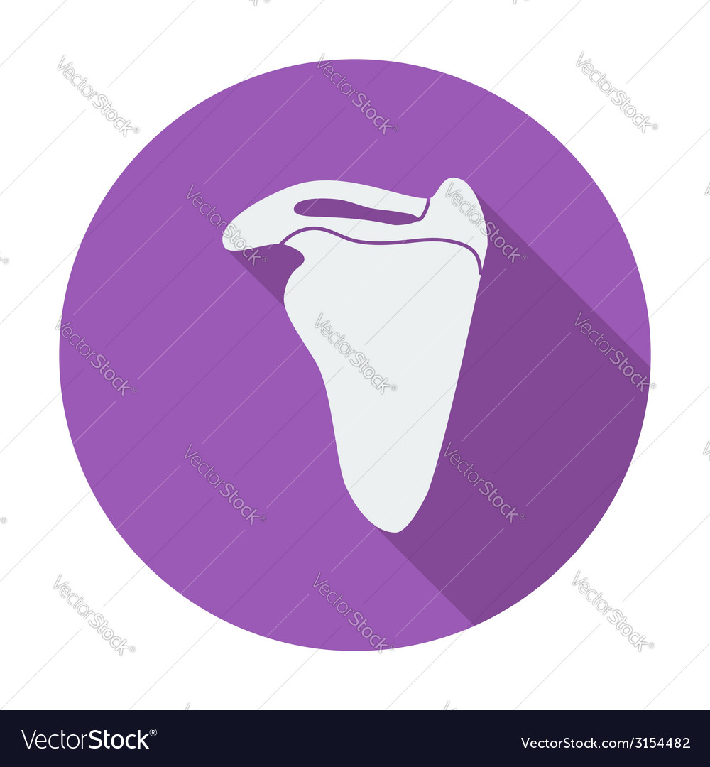 Scapula vector | Price: 1 Credit (USD $1)