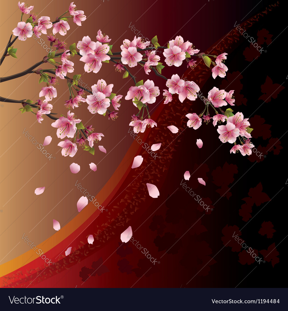 Background with sakura blossom japanese cherry vector | Price: 1 Credit (USD $1)