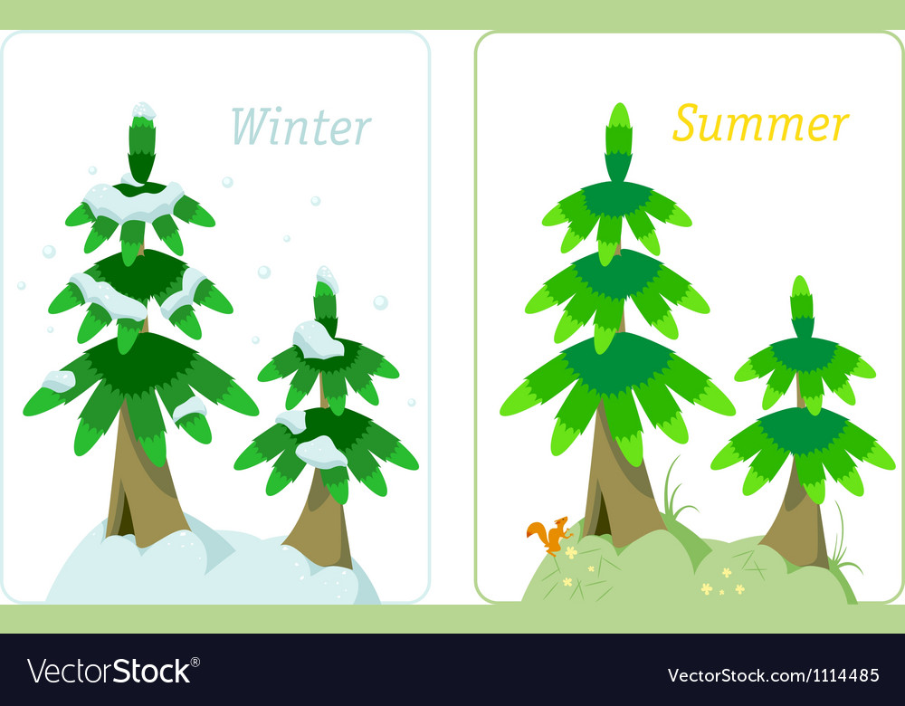 Fir tree in summer and winter vector | Price: 1 Credit (USD $1)