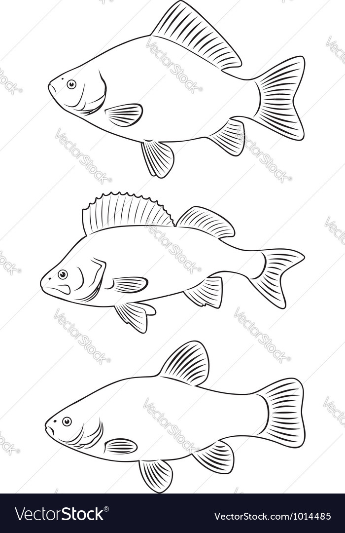 Freshwater fish vector | Price: 1 Credit (USD $1)