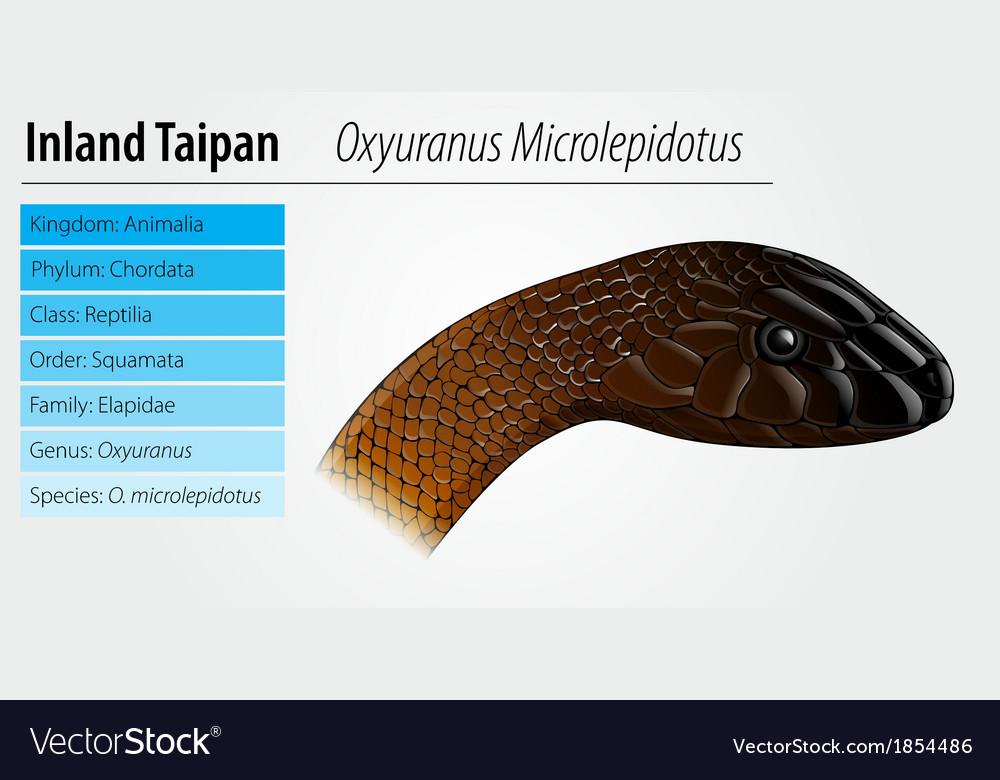 Oxyupanus microlepidotus vector | Price: 1 Credit (USD $1)