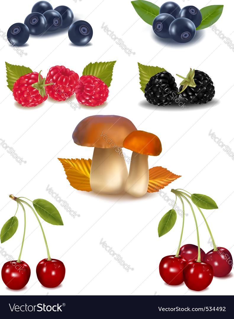 Group of berries vector | Price: 3 Credit (USD $3)