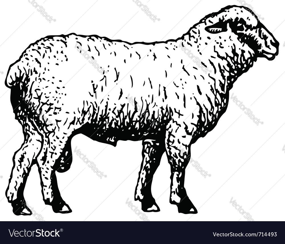 Shropshire sheep vector | Price: 1 Credit (USD $1)