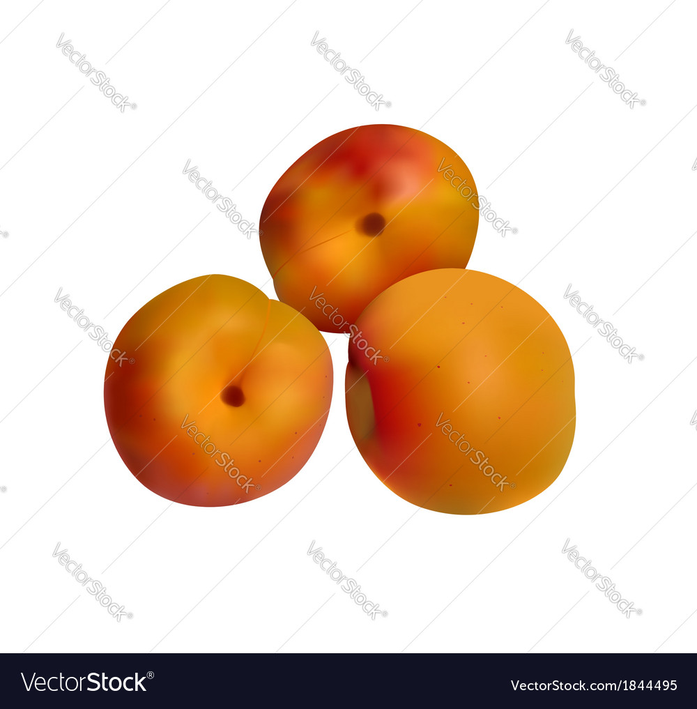 Orange apricots isolated on white vector   Price: 1 Credit (USD $1)