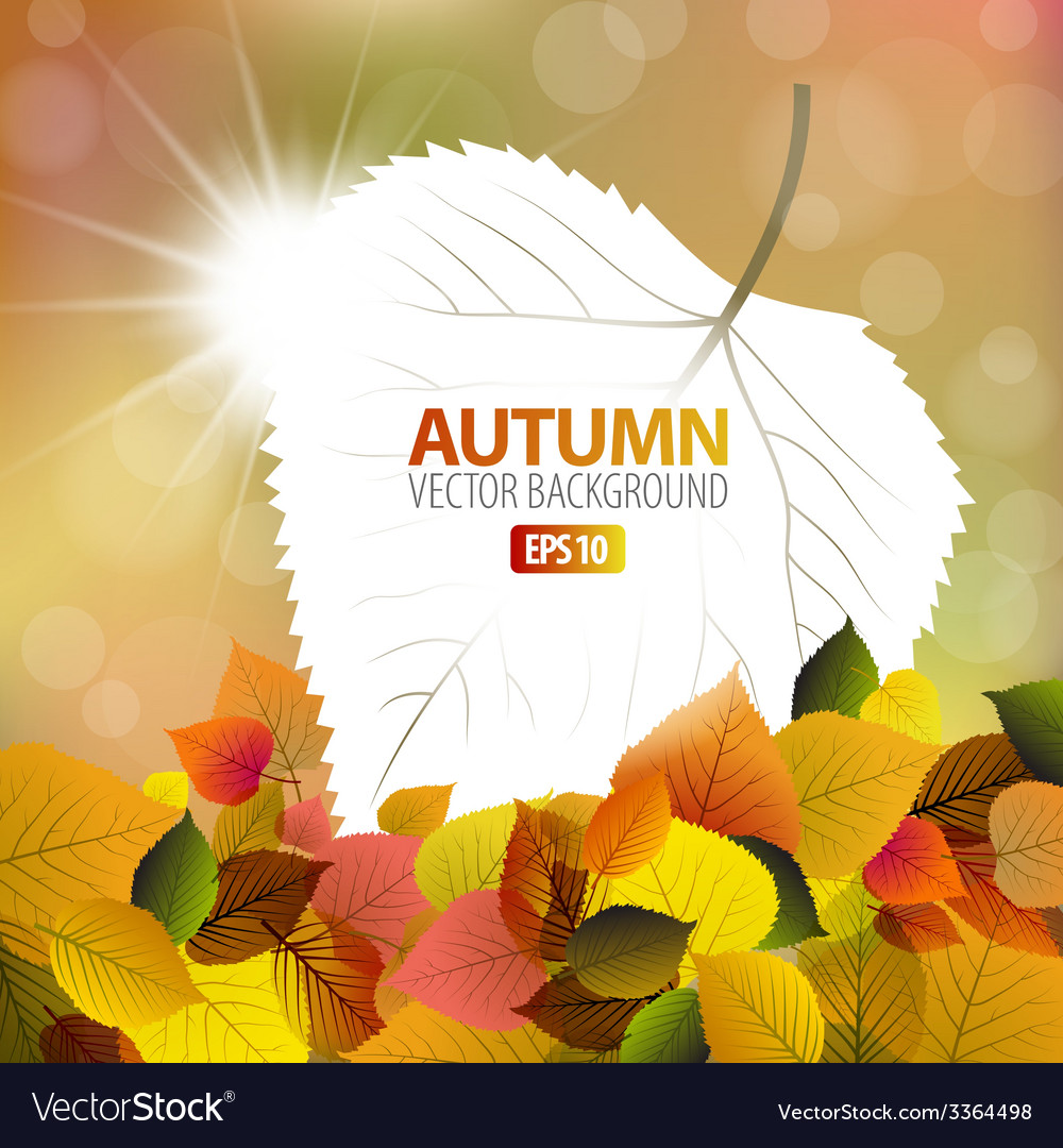 Autumn background with a card vector | Price: 1 Credit (USD $1)