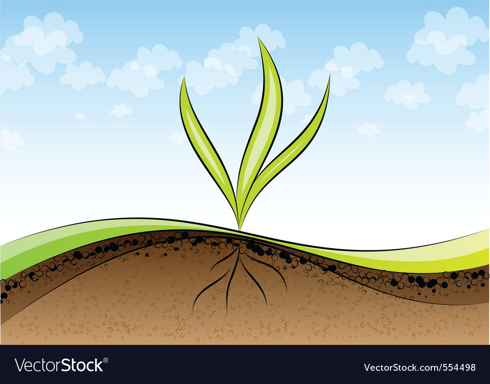Green plant germinating vector | Price: 1 Credit (USD $1)
