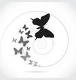 Silhouette butterflies vector