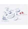Hand drawn fruits and berries vector
