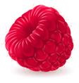 Appetizing fresh raspberry vector