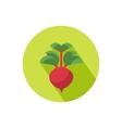 Radish icon vector