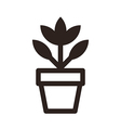 Flower in pot icon vector