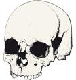 Skull in profile vector