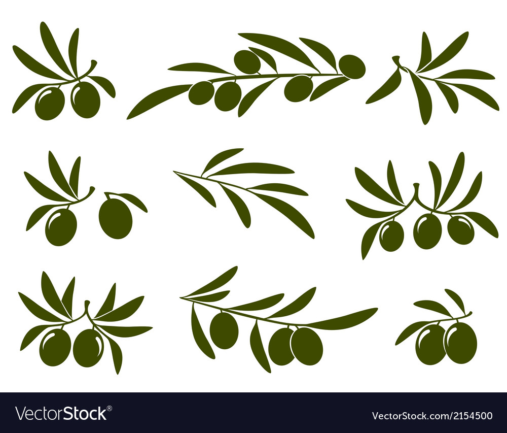 Olive branch set vector | Price: 1 Credit (USD $1)