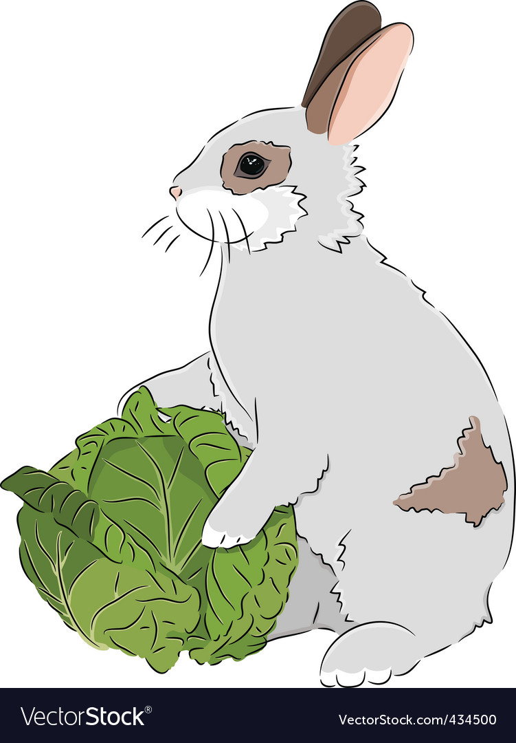 Rabbit with cabbage vector | Price: 1 Credit (USD $1)