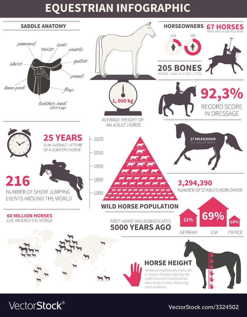 Equestrian infographic vector