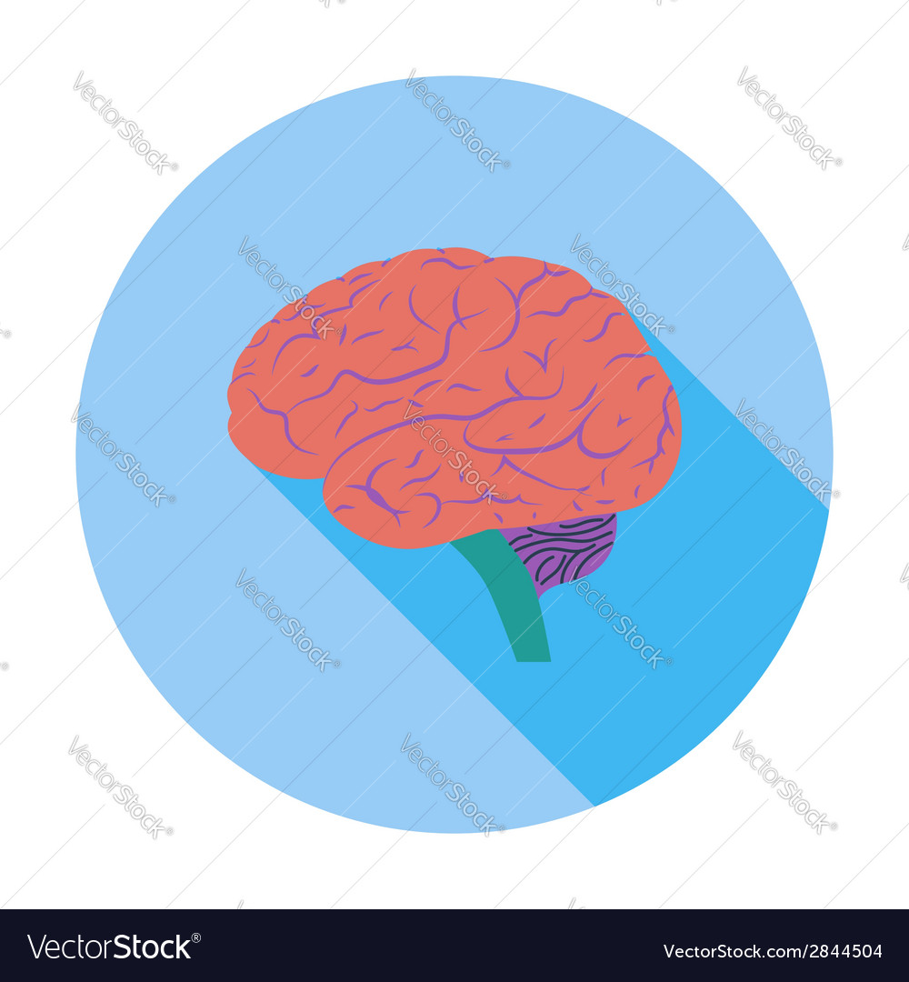 Brain vector | Price: 1 Credit (USD $1)