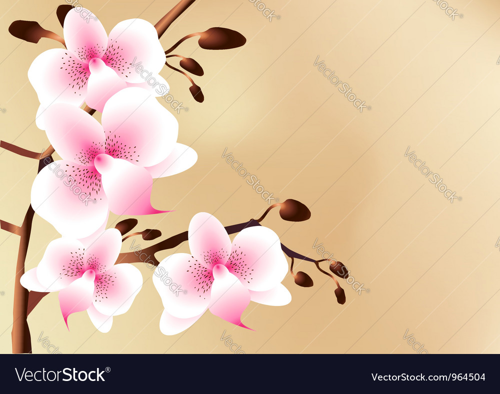 White orchids with pink spots flowers and buds vector   Price: 1 Credit (USD $1)