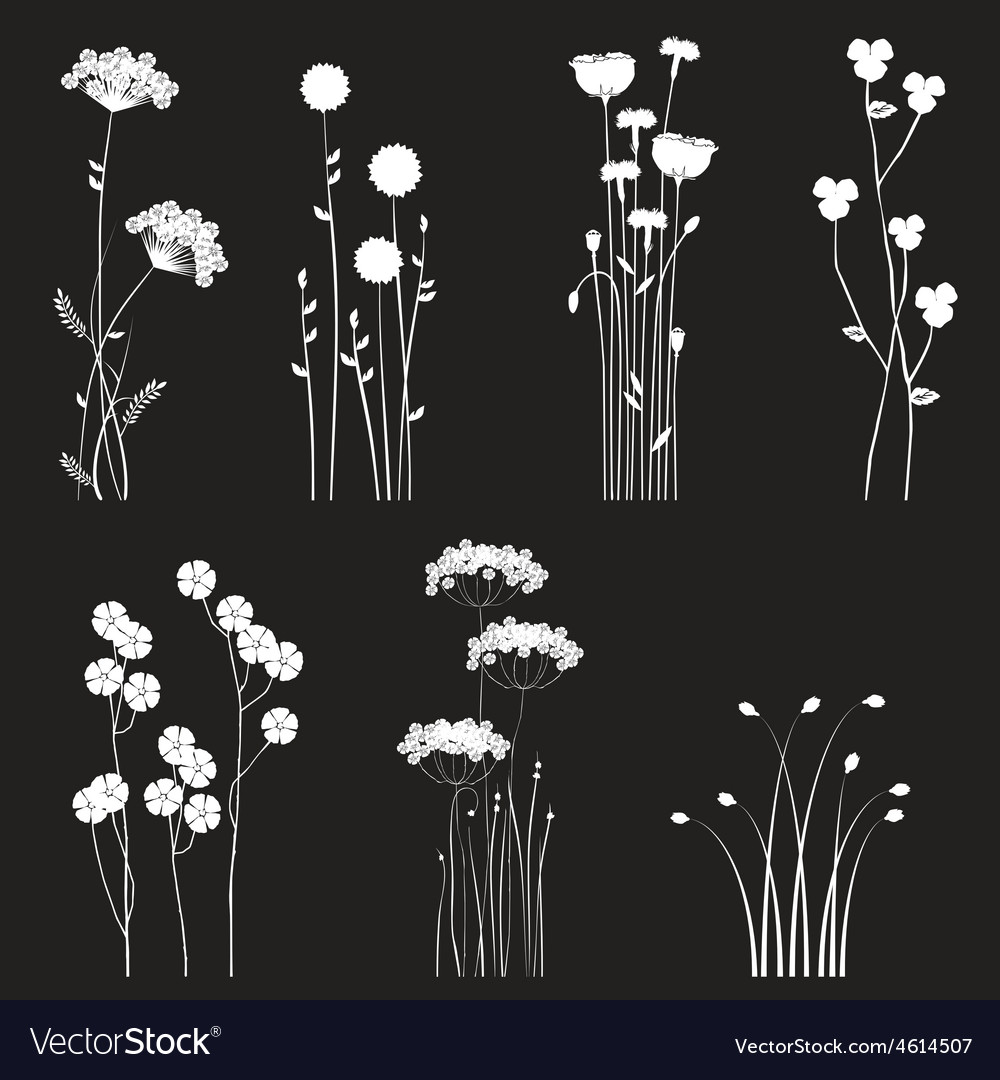 Drawing blooming flowers vector | Price: 1 Credit (USD $1)