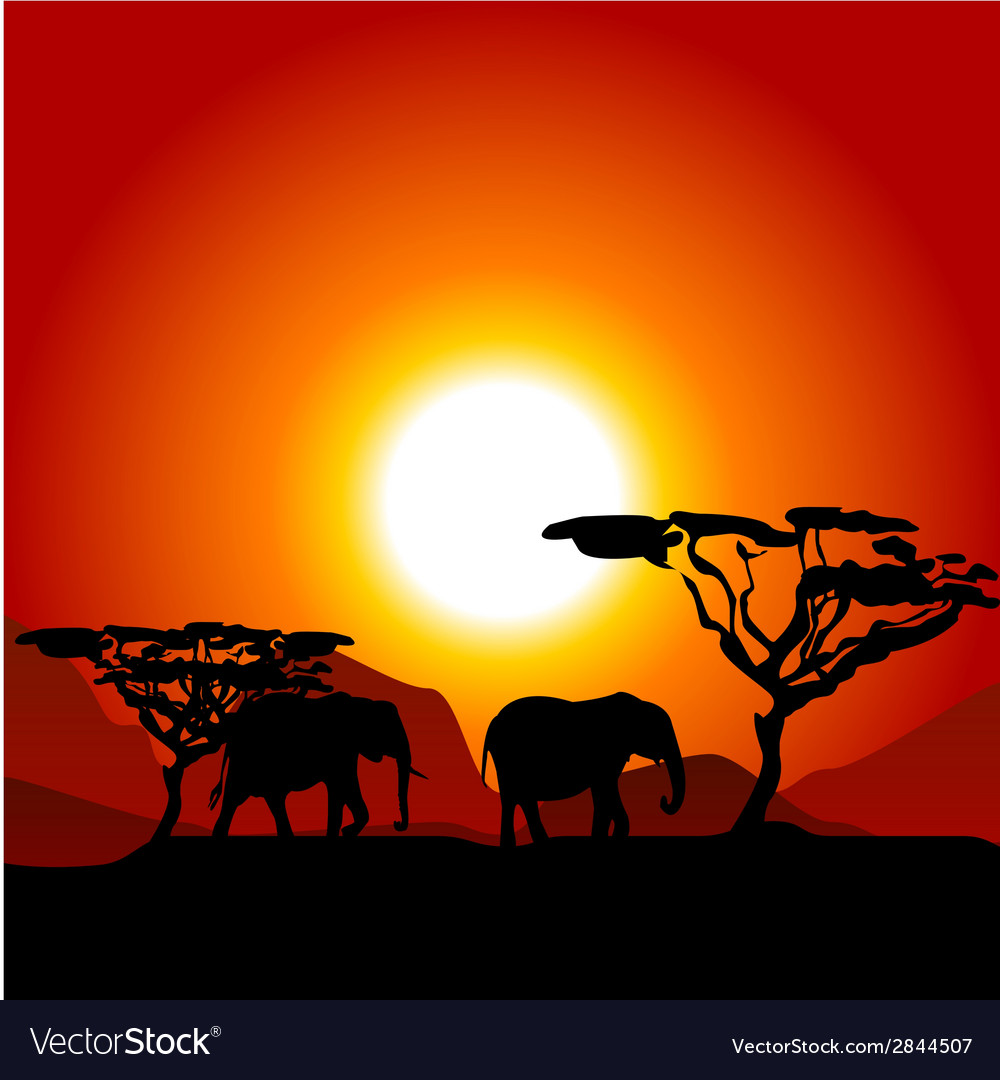 Silhouettes of elephants on african sunset vector | Price: 1 Credit (USD $1)