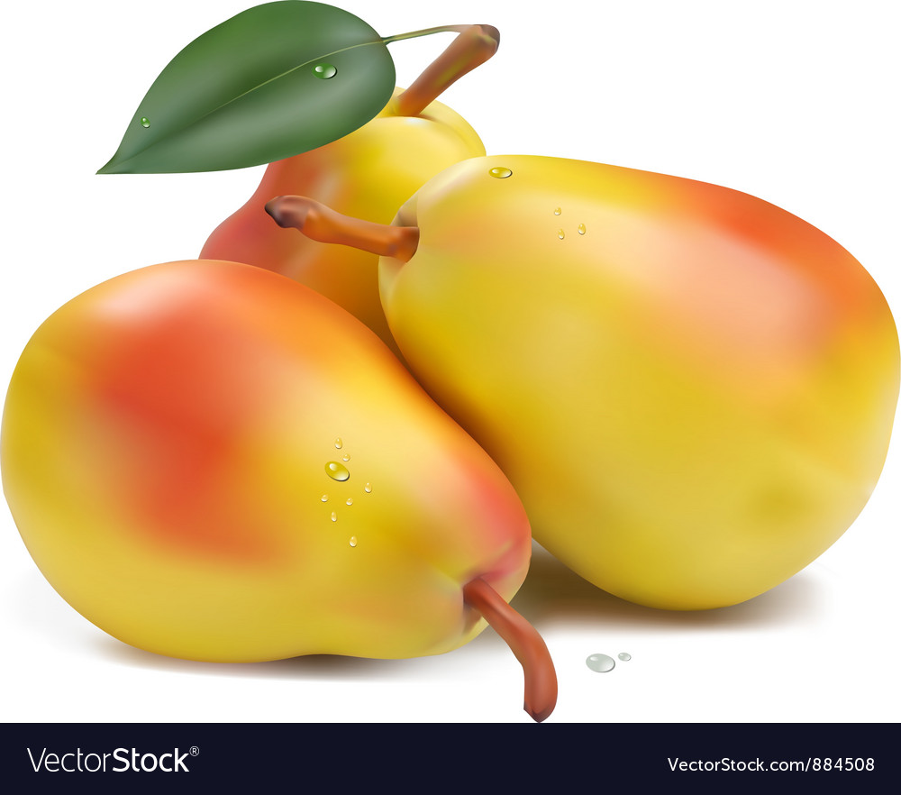 Pears with leaf vector   Price: 1 Credit (USD $1)