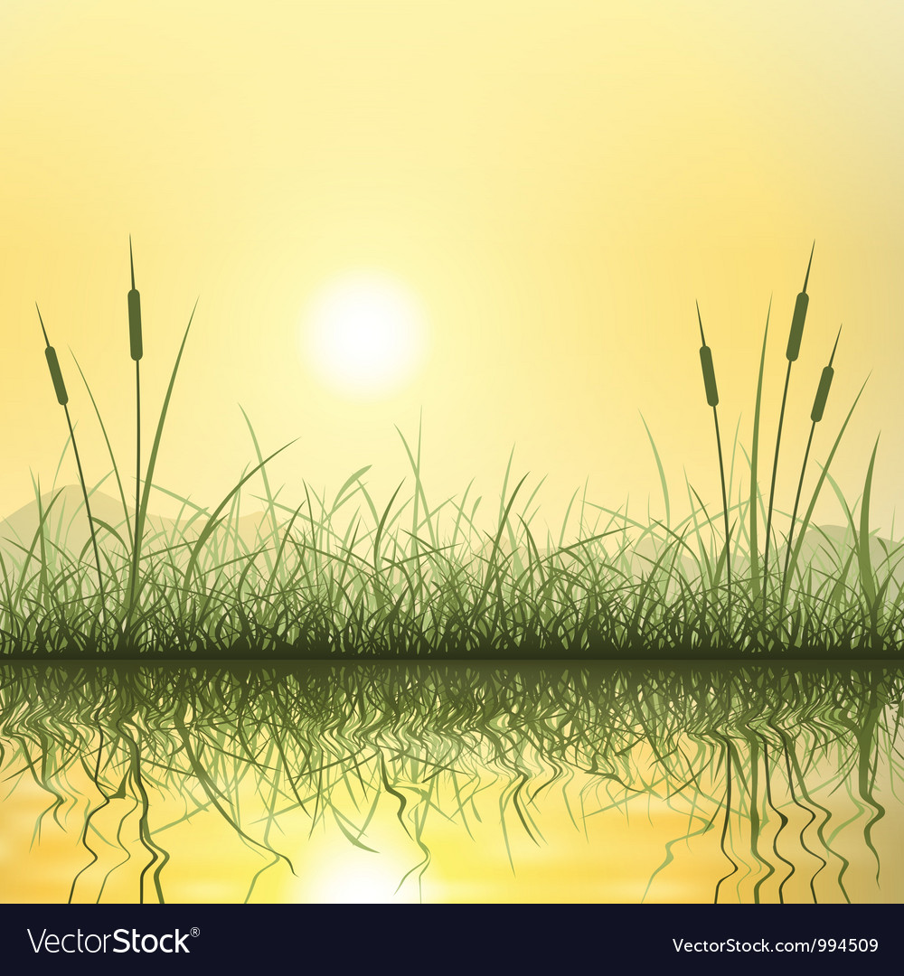 Grass and reeds vector | Price: 1 Credit (USD $1)