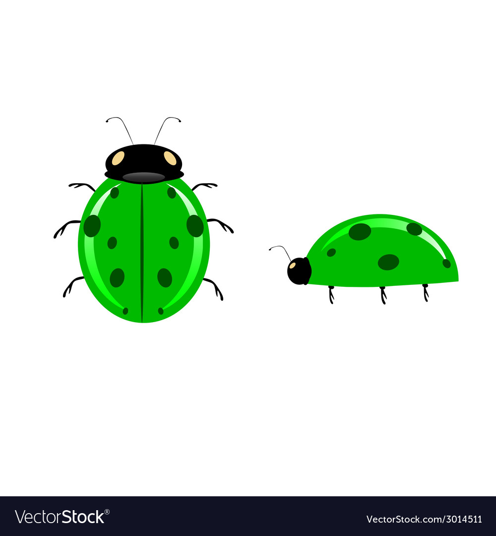 Green ladybug vector | Price: 1 Credit (USD $1)