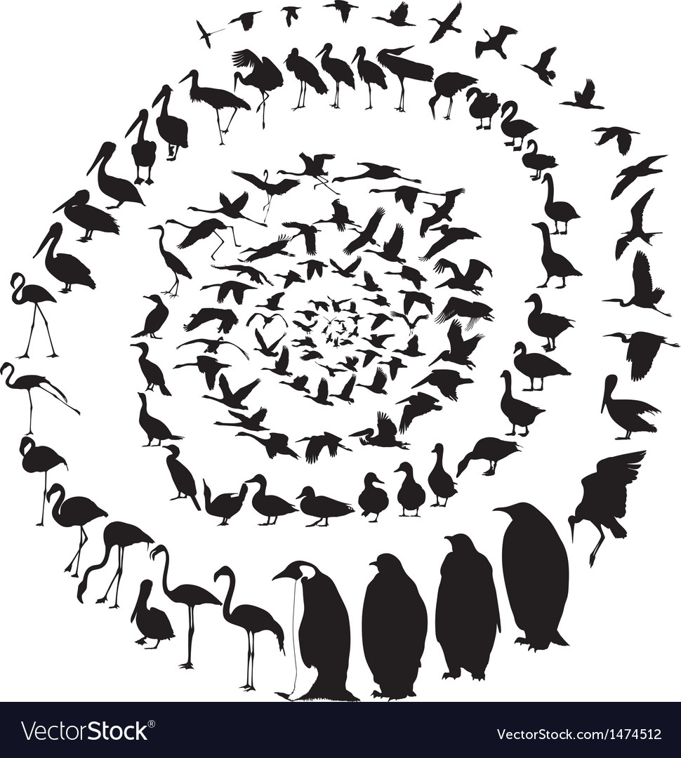 Birds waterfowl in spiral vector | Price: 1 Credit (USD $1)