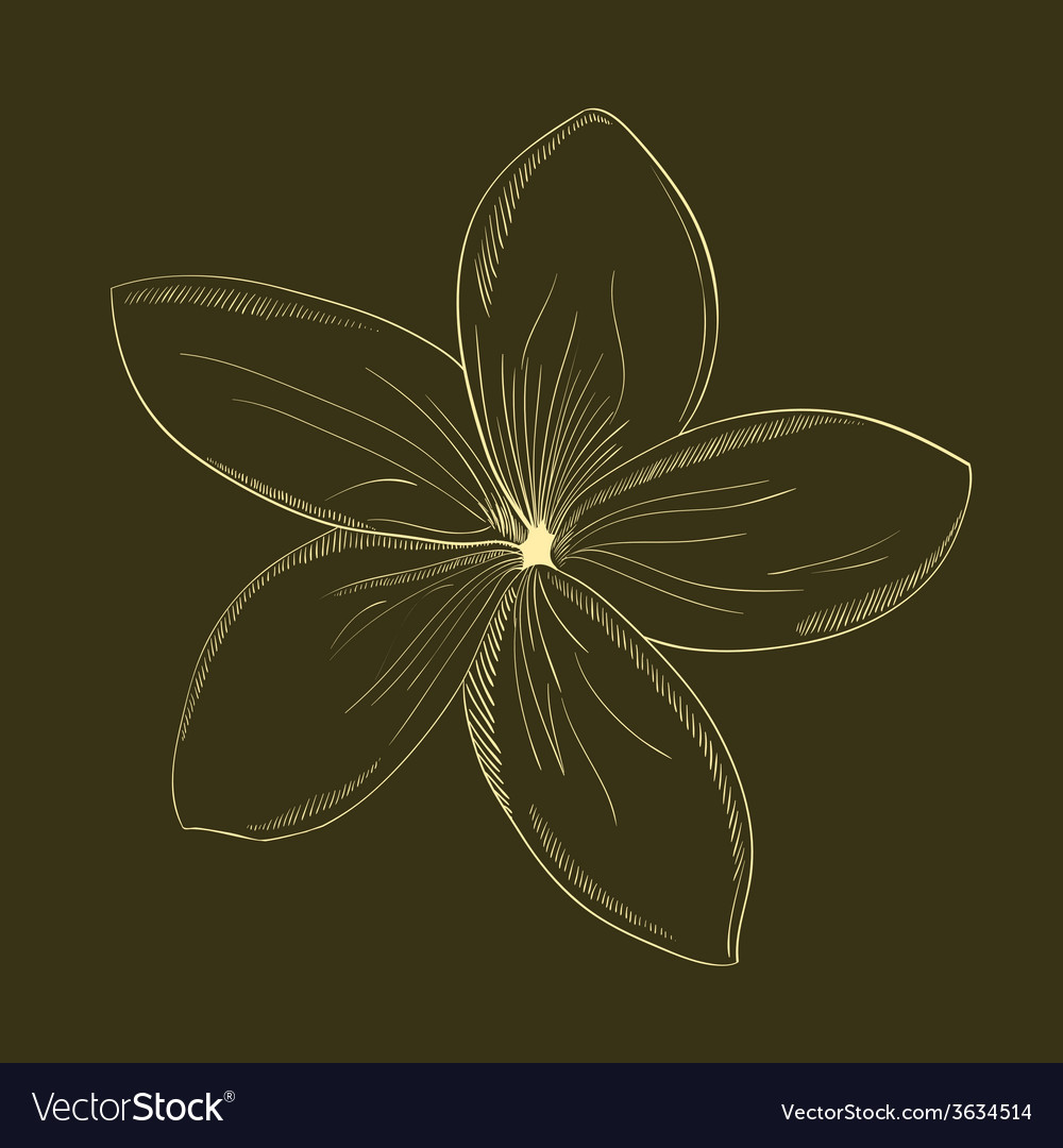 Hand-drawing flower vector | Price: 1 Credit (USD $1)