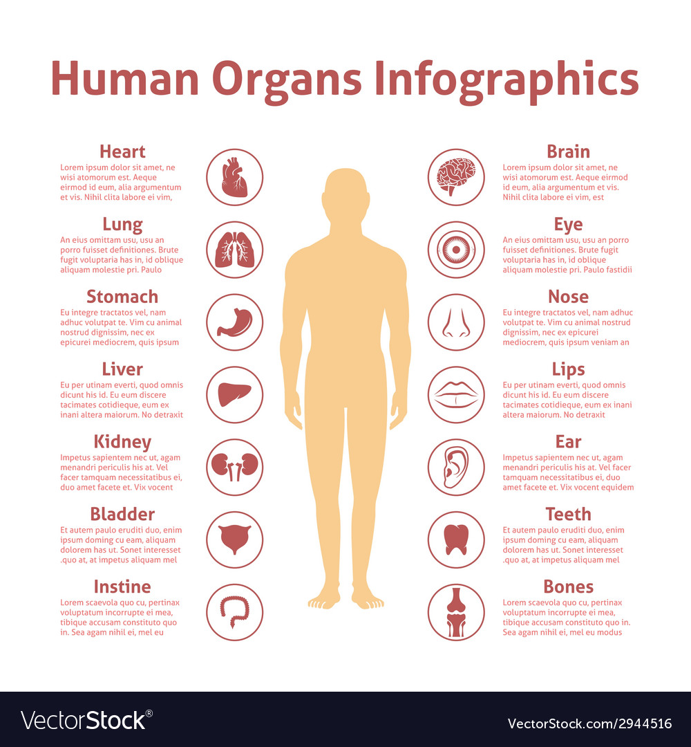 Human infographic set vector | Price: 1 Credit (USD $1)