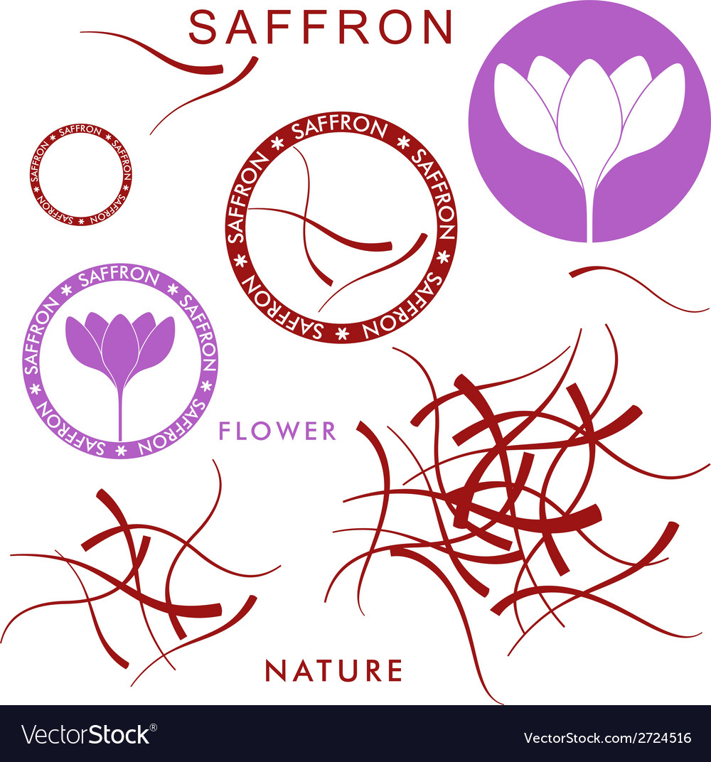 Saffron vector | Price: 1 Credit (USD $1)