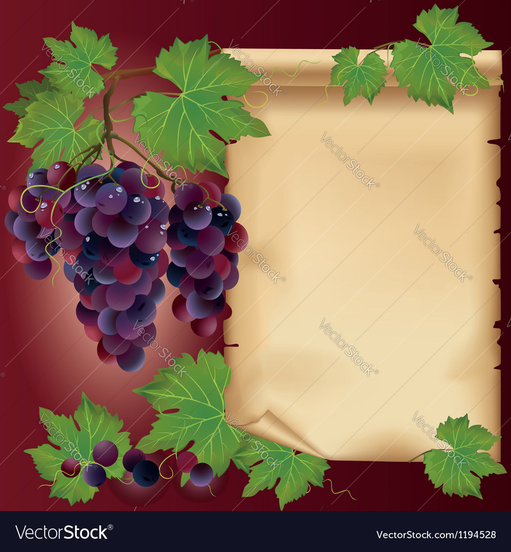 Background with black grape and old paper vector | Price: 1 Credit (USD $1)