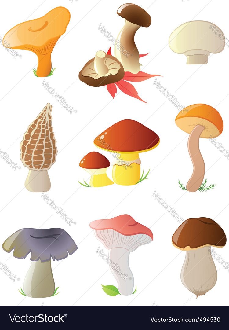 Forest mushrooms vector | Price: 1 Credit (USD $1)
