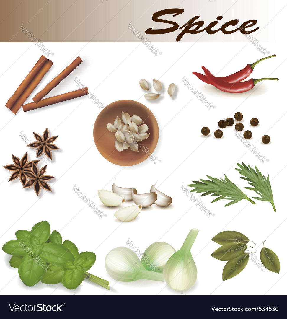 Of spices vector vector | Price: 3 Credit (USD $3)