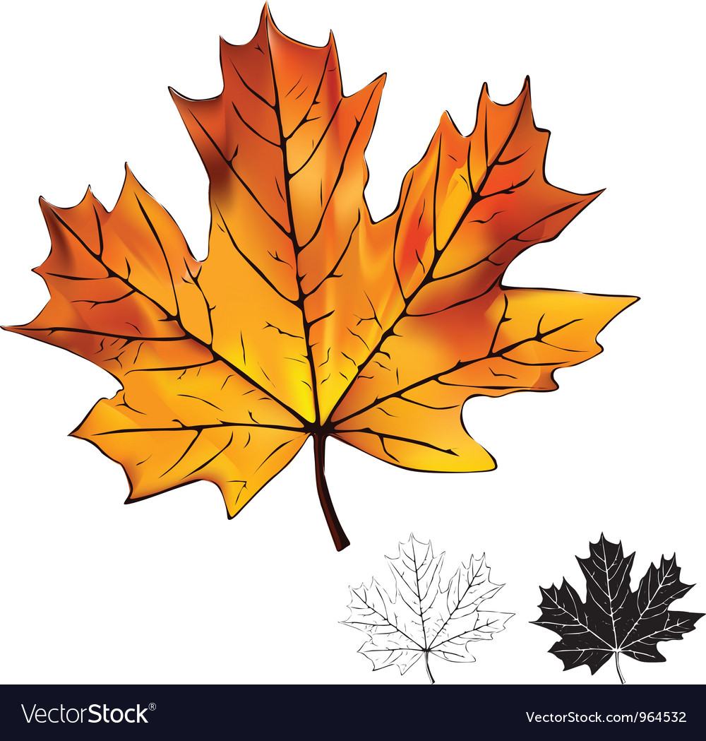 Autumn maple leaf isolated vector | Price: 1 Credit (USD $1)