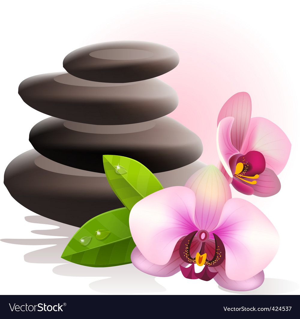 Spa stones and orchid vector | Price: 1 Credit (USD $1)
