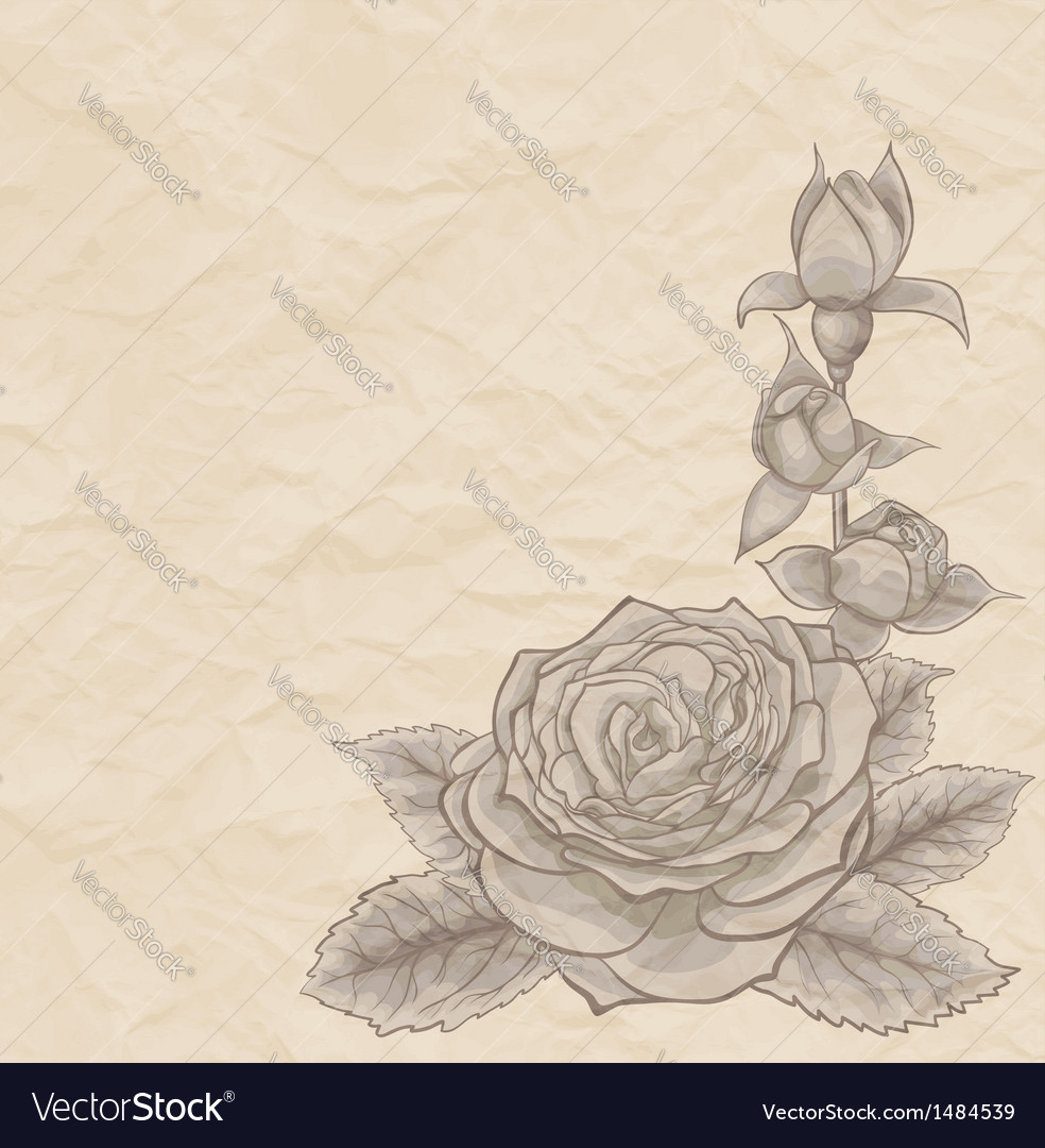 Vintage background beautiful rose in the corner vector | Price: 1 Credit (USD $1)