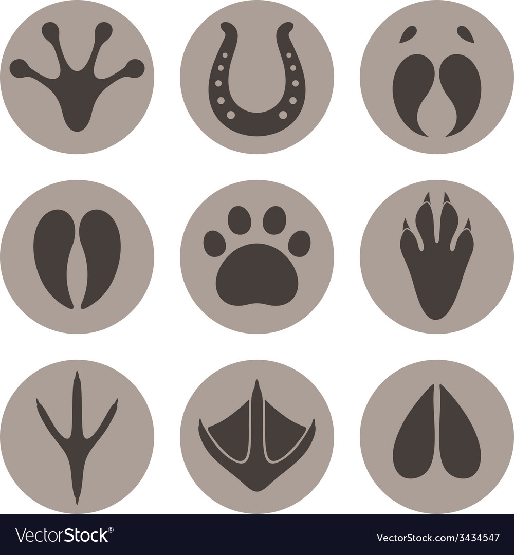 Paw print icon set vector | Price: 1 Credit (USD $1)