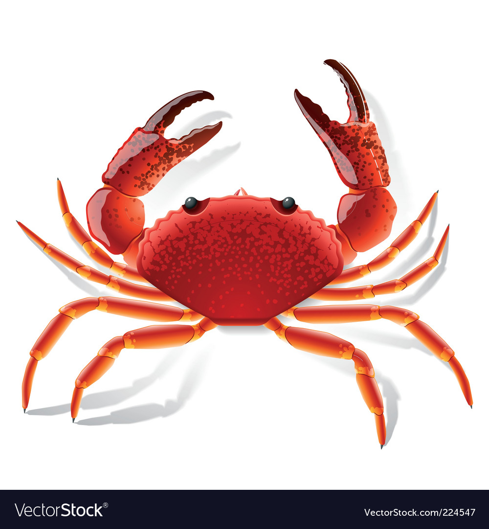 Red crab vector | Price: 1 Credit (USD $1)