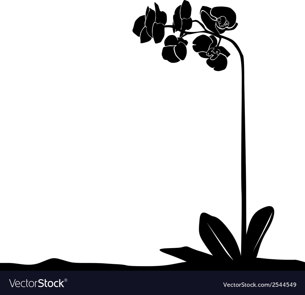 For designers plant - orchid vector | Price: 1 Credit (USD $1)