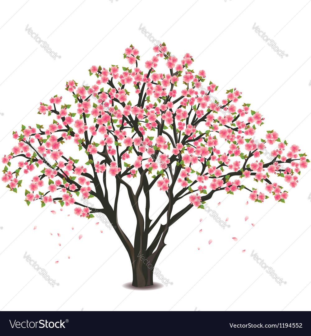 Japanese cherry tree blossom over white vector | Price: 1 Credit (USD $1)