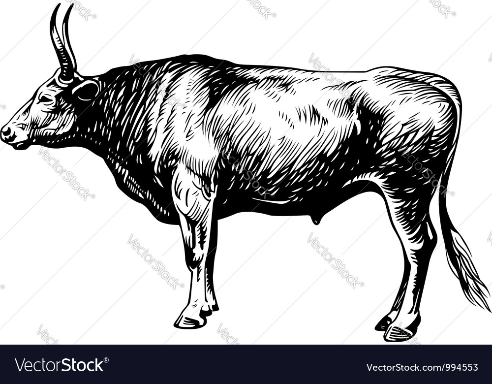 Bullock vector | Price: 1 Credit (USD $1)