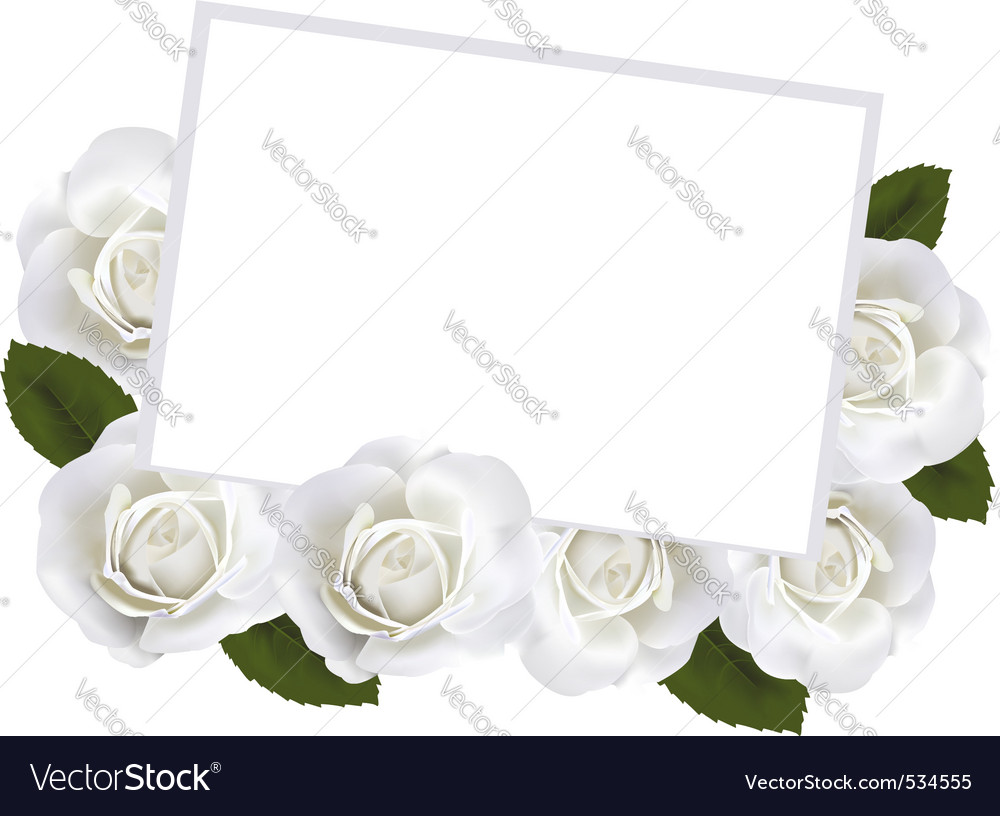 Roses and white paper card ve vector | Price: 1 Credit (USD $1)