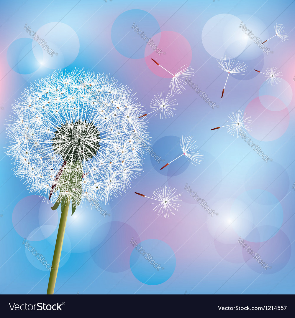 Flower dandelion on light blue pink background vector | Price: 1 Credit (USD $1)
