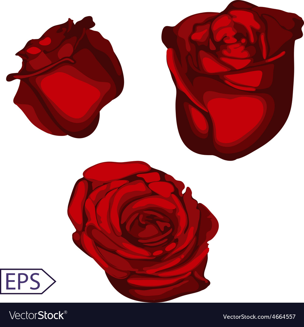 Isolate vintage rose flower vector | Price: 1 Credit (USD $1)