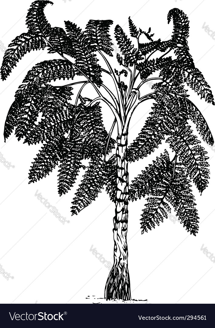 Plant lyginopteridopsida vector | Price: 1 Credit (USD $1)