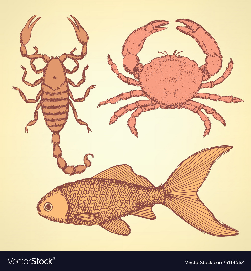 Sketch cute crab scorpion and fish vector | Price: 1 Credit (USD $1)