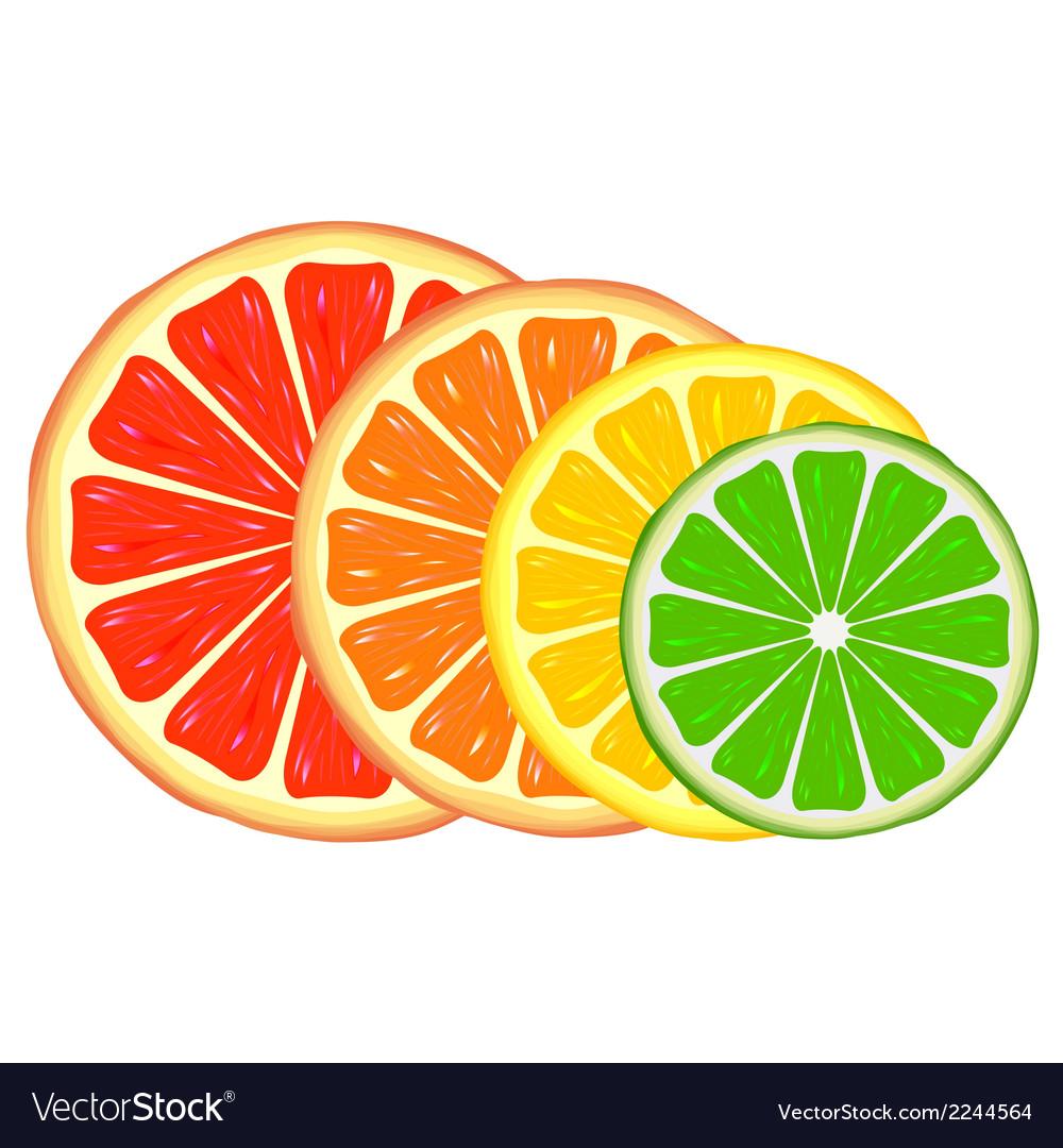 Citrus vector | Price: 1 Credit (USD $1)