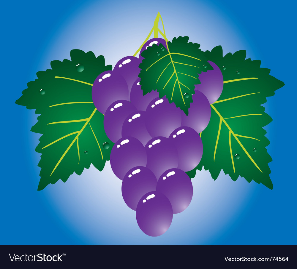 Purple grape on blue background vector | Price: 1 Credit (USD $1)