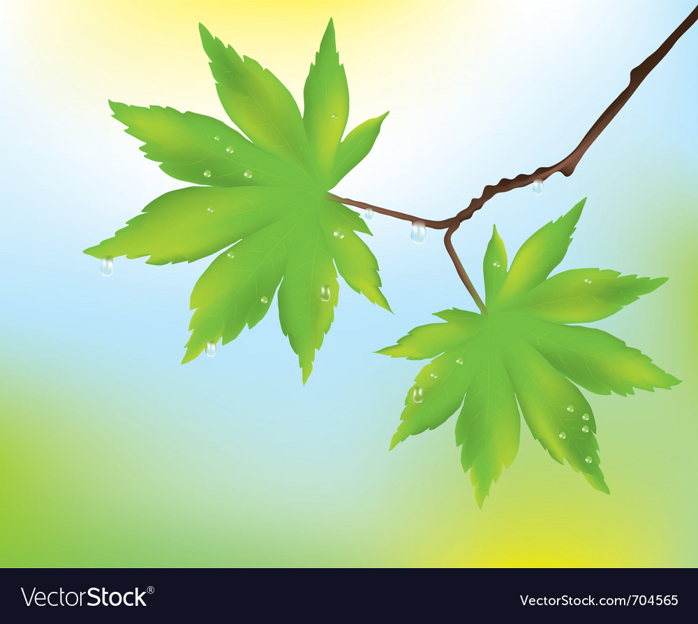 Maple leaves and rain drops vector | Price: 1 Credit (USD $1)