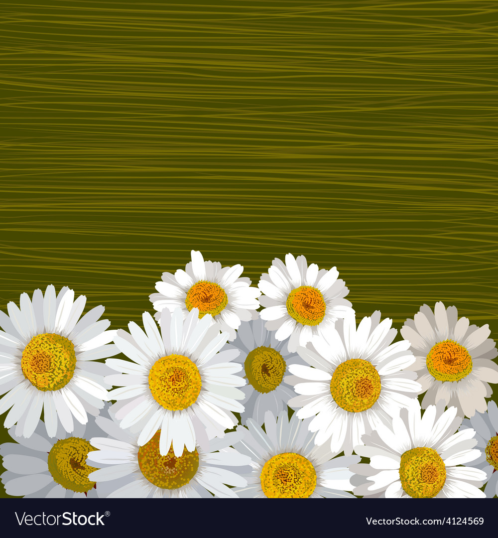 Green striped background with flowers of camomile vector | Price: 1 Credit (USD $1)